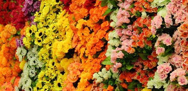 ¿Dónde conseguir flores en Puerto Rico?